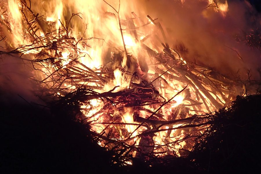 Fire_forest