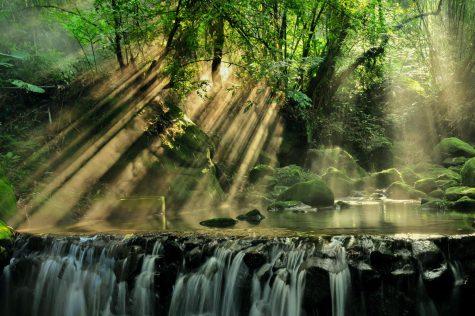 The amazon rain forest