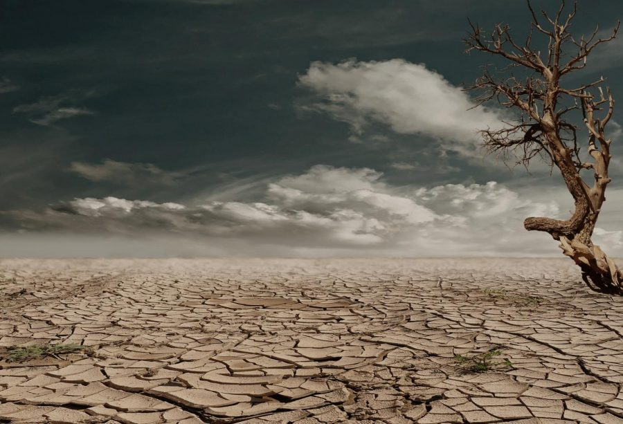 Barren land with tree